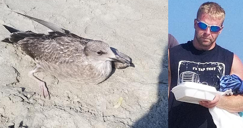 Photo of NH Man Who Accidentally Kicked Seagull at Hampton Beach Is Fined